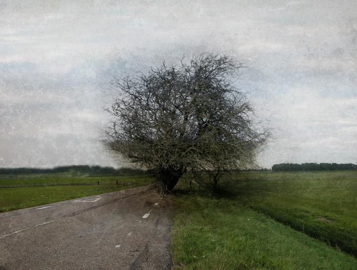 Päättäväisyyden puu - Tree of Determination