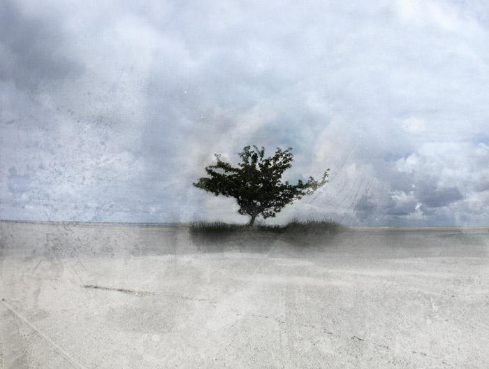 Yksinäisyyden puu - Tree of Loneliness
