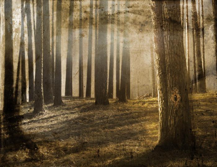 Lukittu metsä - Locked Forest