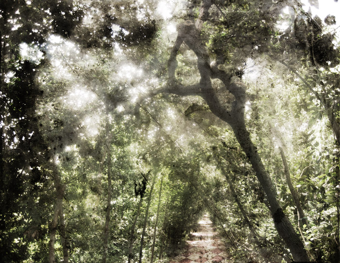 Polku - Path