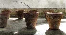 Viimeiset Kyyneltarha-näyttelyt – The last Garden of Tears exhibitions
