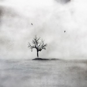 Yksin puussa - Alone in a Tree