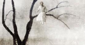 Naisia puussa – Women in Trees, 2014