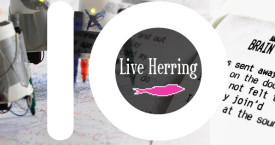 Live Herring 10 v / years