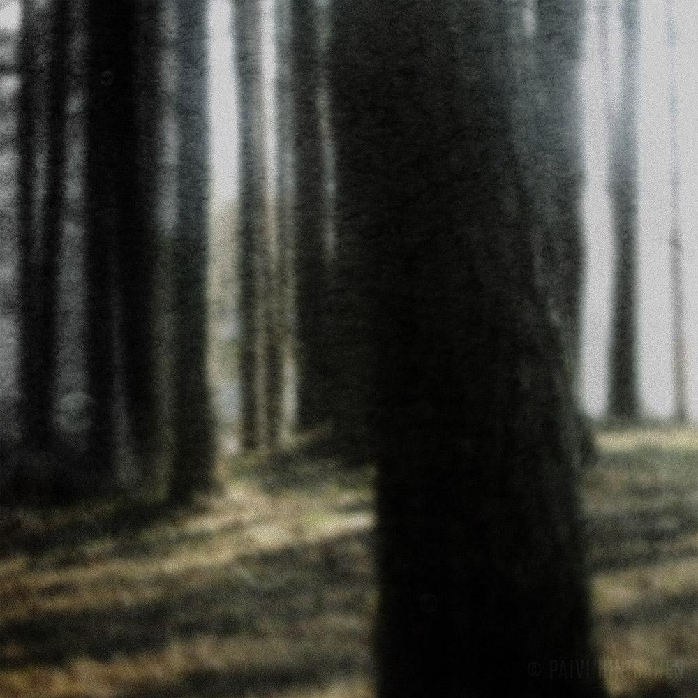 Metsä, jossa saippuakuplat eivät rikkoudu II - The Forest, Where Soap Bubbles Won't Break II